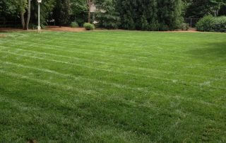 best lawn care services near me
