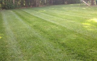indian trail lawn care