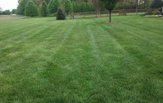 lawn care marvin nc