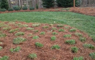 lawn care services waxhaw