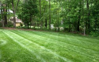 lawn care weddington