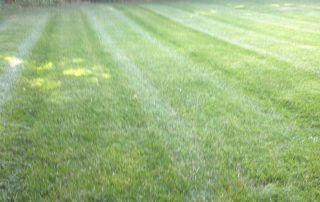matthews nc lawn care