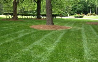 residential lawn care services near me