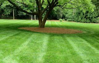 waxhaw lawn care